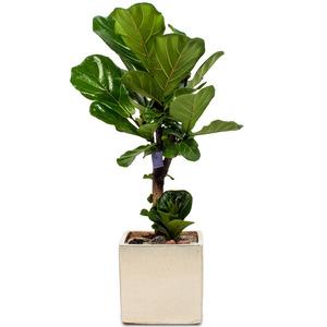 떡갈나무3
